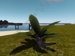 3d model small date palmtree