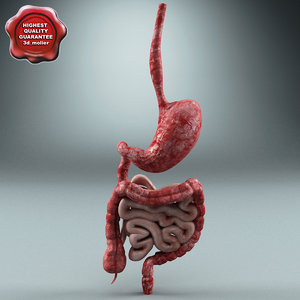 3ds digestive modelled