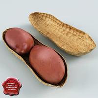 3d model peanut v1