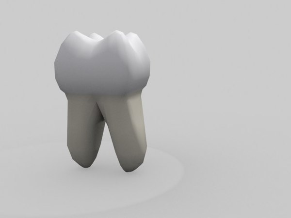 teeth molar model