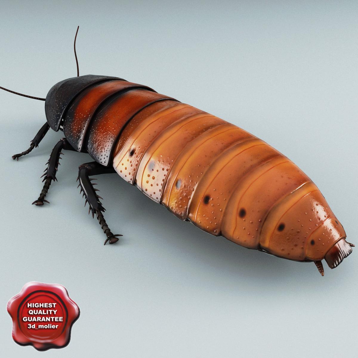 madagascar hissing cockroach 3d model