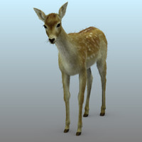 3d model of photorealistic deer animation