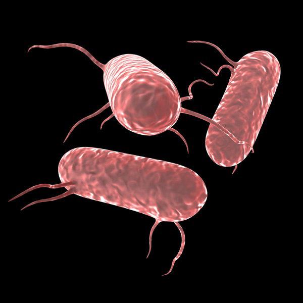 salmonella bacteria 3ds