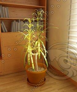 yuka-plant 3d max