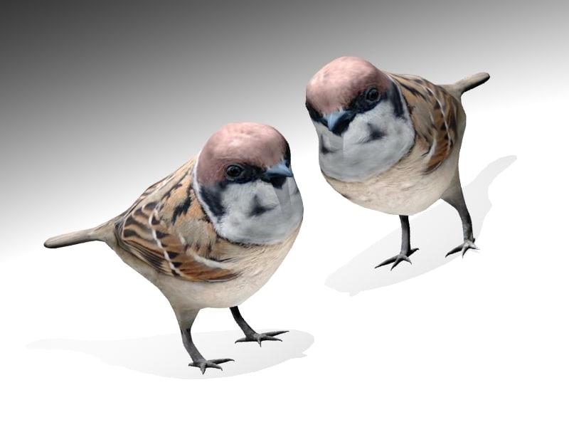 3ds sparrow bird
