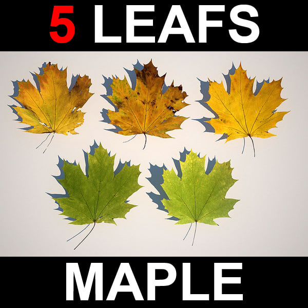 max 5 maple leafs