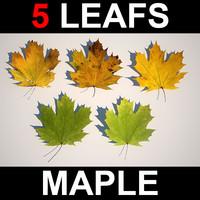 max 5 maple leafs