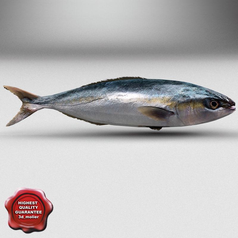 herring fish obj