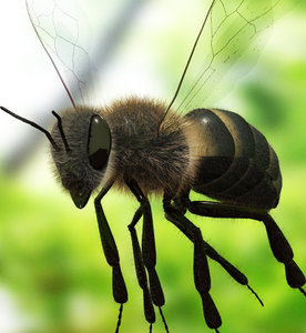 3d model bee flying