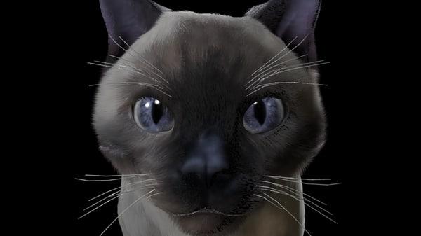3d cat fur model