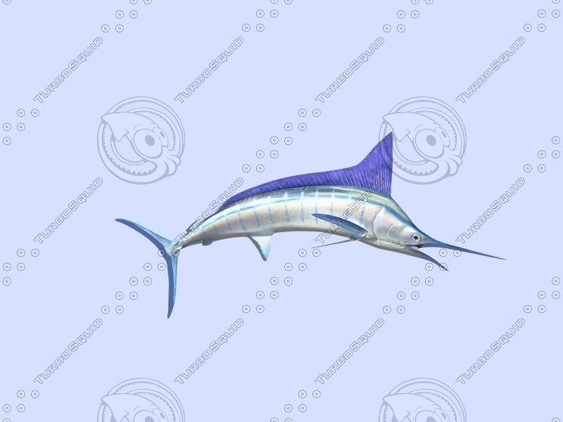 3ds bluemarlin fish