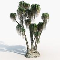 Plant Ponytail