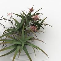 Plant Aloe