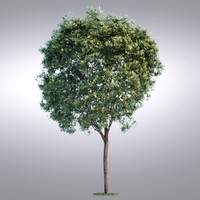 HI Realistic Series Tree - 019