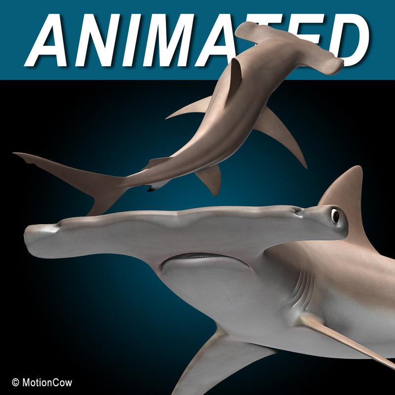 3d hammerhead shark hammer