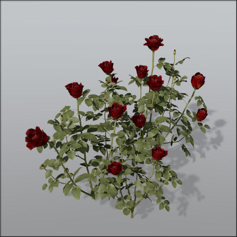 c4d rose bush
