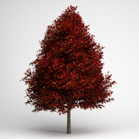 CGAxis Red American Sweetgum 10