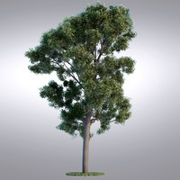 max hi realistic series tree