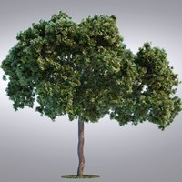 3ds max realistic tree