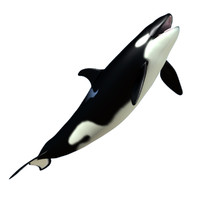 baby killer whale 3d dxf