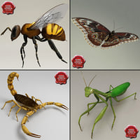 3d insects v2 model