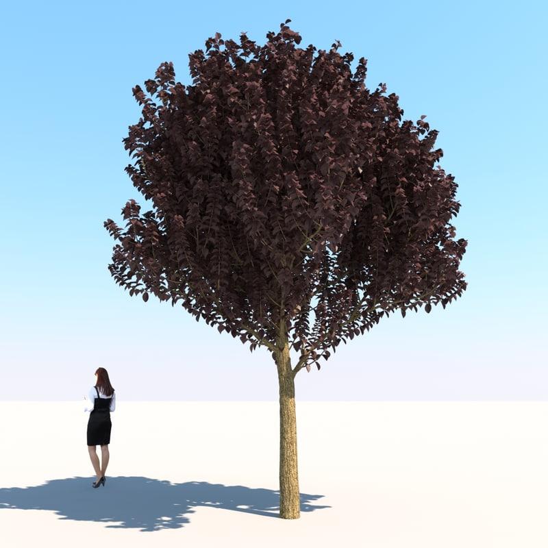 3d purple leaf plum tree model