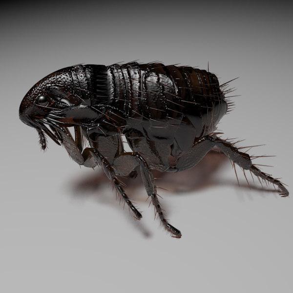 maya flea
