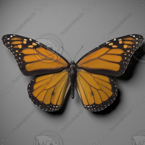 3d monarch butterfly model