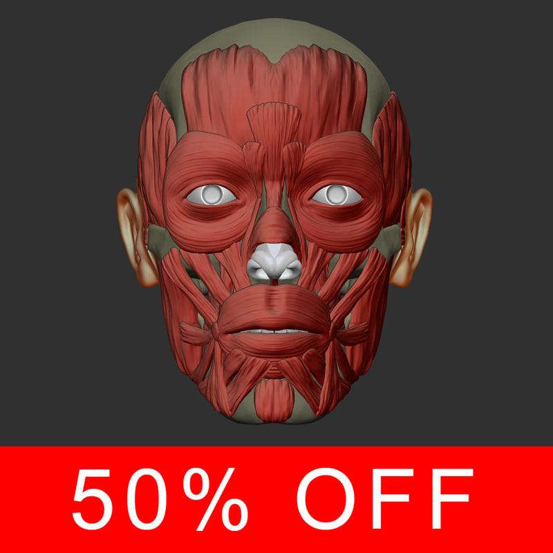 realistic head muscles anatomy max
