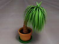 Palm Tree Plant Pot