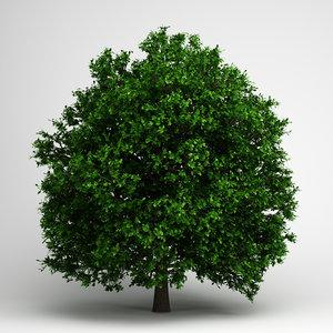 3d pedunculate oak 14 model
