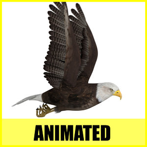 eagle flight flying animation 3d model