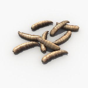 3d model of maggot worm