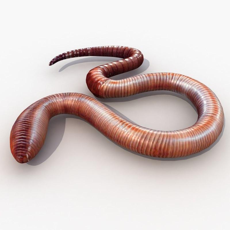 earth worm 3d model