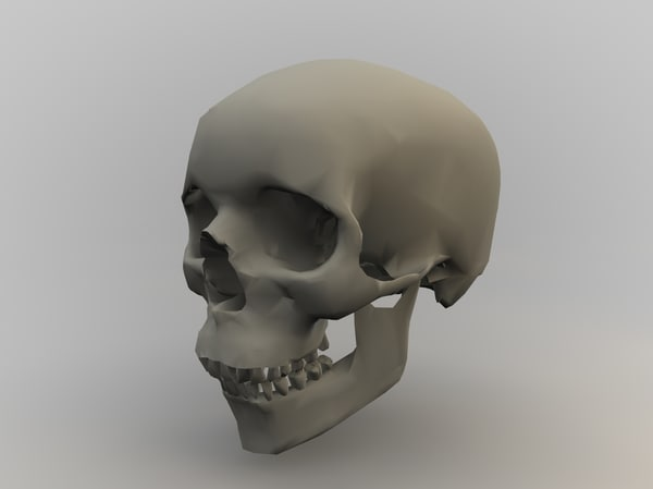 free c4d mode anatomy body