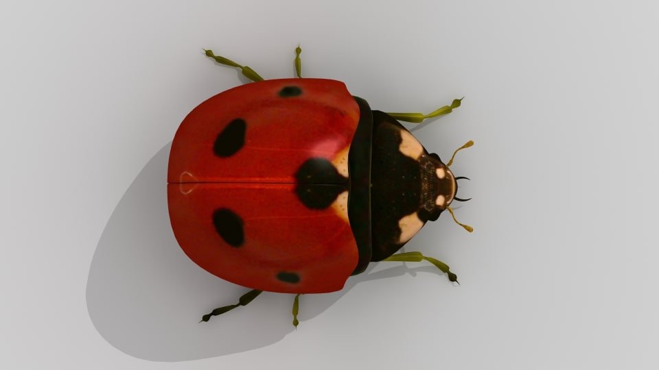 ladybug lady bug 3d model
