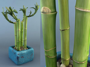 bamboo plant 3d model