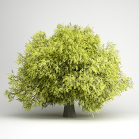 honey locust 07 3d obj