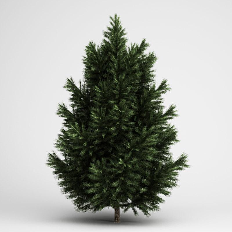 3d european black pine 23 model