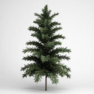 scots pine 24 3d model