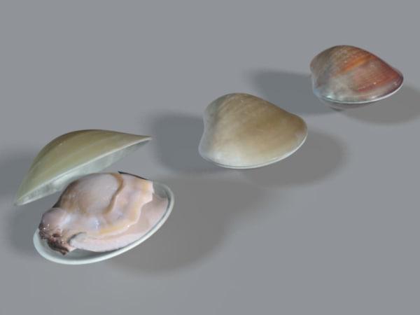clam x