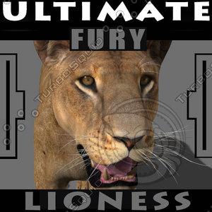 3d model lioness fur