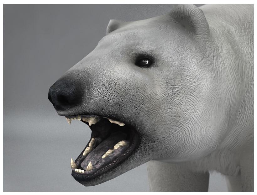 polar white bear rigged 3d model