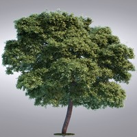 HI Realistic Series Tree - 014