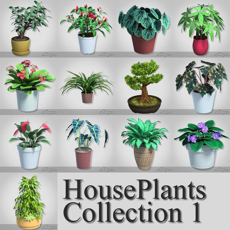 houseplants 13 flower plants max