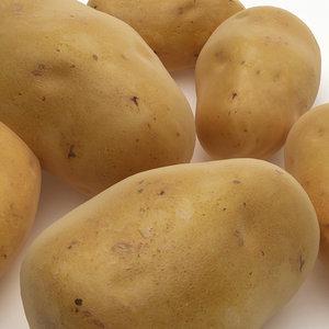 potato 3d max