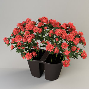 chrysanths plant pot balcony 3d c4d