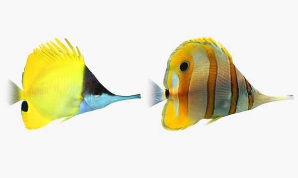 longnose butterfly fish 3ds
