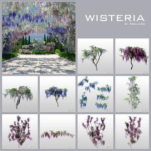 wisteria trees max