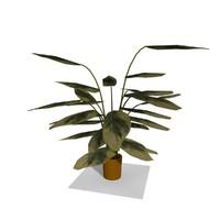 Cartoon Indoor Plant 6